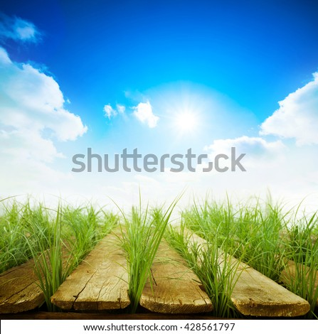 Summer background with Wood table, green grass and sunlight - stock photo
