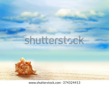 Summer beach. Seashell on a sandy beach. The ocean, the beautiful sky and clouds. - stock photo