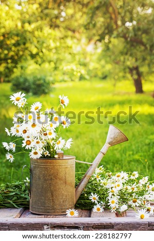 Summer beautiful garden with daisy flowers - stock photo