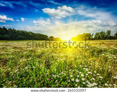 Summer blooming green field with meadow flowers with sunset sun and blue sky - stock photo