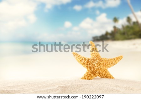 Summer concept with sandy beach and starfish. - stock photo