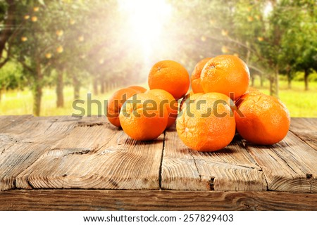 summer day and sun with orange fruits  - stock photo