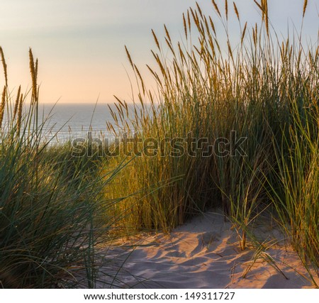 Summer dunes - stock photo