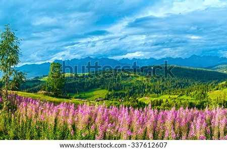 Summer evening mountain village outskirts with pink flowers in front and Tatra range behind (Gliczarow Gorny, Poland) - stock photo