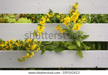 Summer fence - stock photo