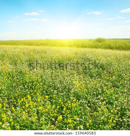 Summer field and sunlight in blue sky.  - stock photo
