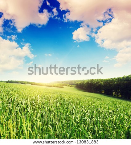 Summer field and sunlight in blue sky. Overcast sky. Ukraine, Europe. Beauty world. - stock photo