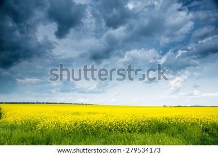 Summer field landscape, yellow rapeseed flowers - stock photo