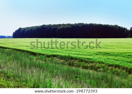 Summer field of grass on a sunny day - stock photo