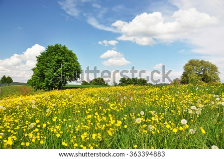 Summer field, Switzerland - stock photo