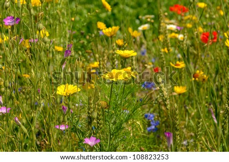 Summer field with a mixture of wild flowers - stock photo