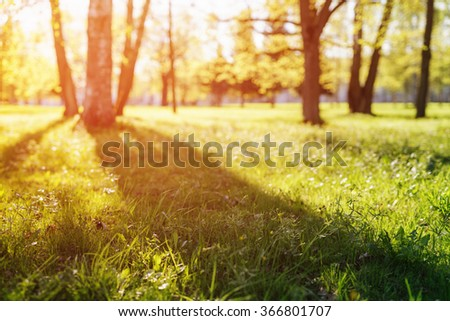 summer field with birches in sunset light - stock photo