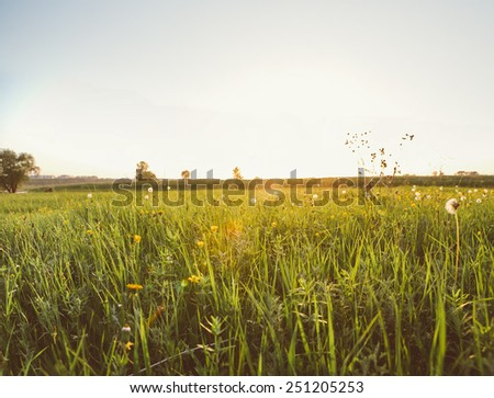 Summer field with dandelions  and sun in blue sky. - stock photo