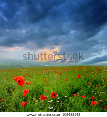 Summer field with Red poppies and dramatic sky before storm. Dark ominous clouds. - stock photo