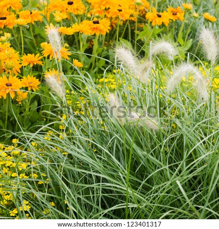 Ornamental grass stock photos images pictures for Ornamental grass with yellow flowers