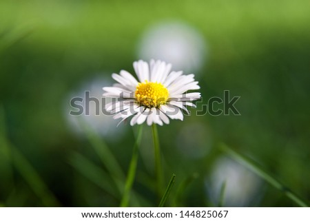 summer, flower, garden,medical,camomile, background, - stock photo