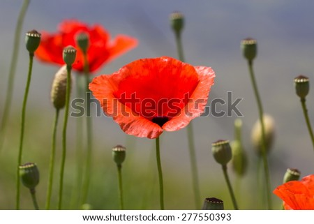 summer flower in the countryside - stock photo