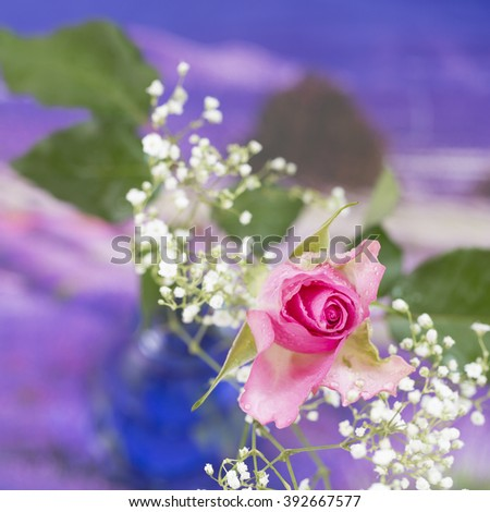 Summer Flower, isolated and square cropped. - stock photo