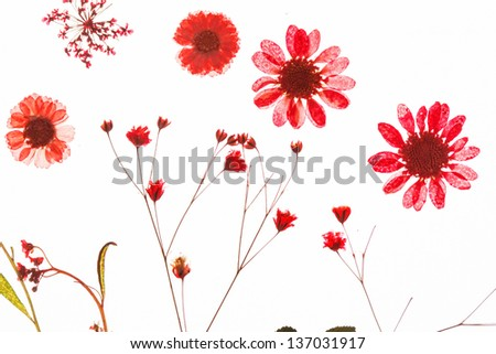 summer flowers - stock photo