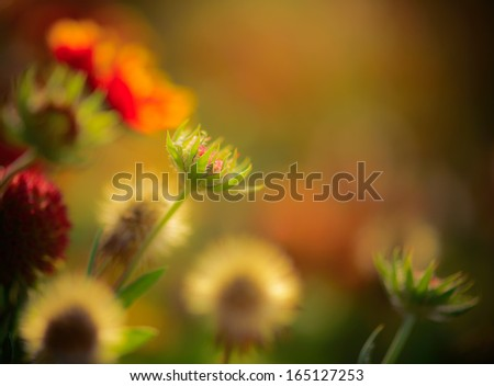 Summer Flowers abstract background - stock photo
