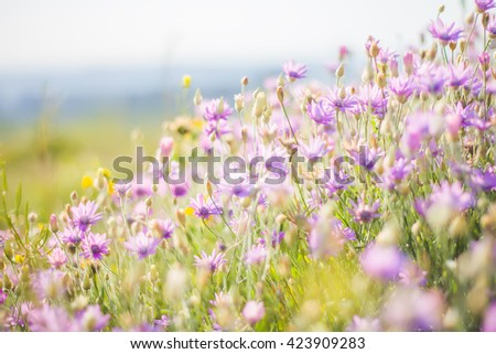 Summer flowers against the sky - stock photo