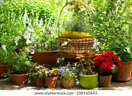 Summer flowers in the garden - stock photo