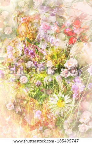 Summer flowers meadow beautiful grungy background - stock photo