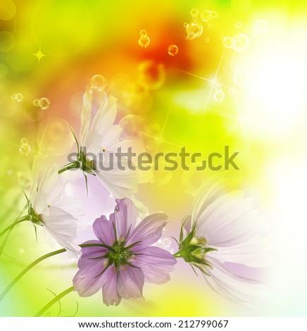 Summer flowers.Nature beautiful background - stock photo