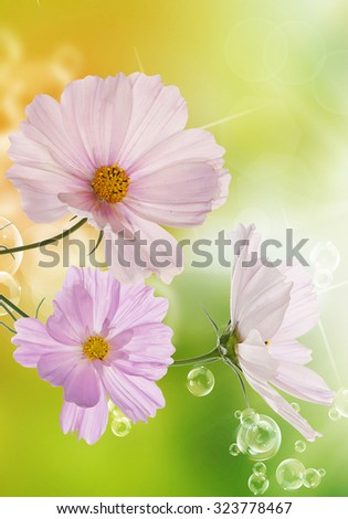 Summer flowers on a morning abstract beautiful nature background - stock photo
