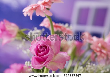 Summer  flowers, pink rose isolated - stock photo
