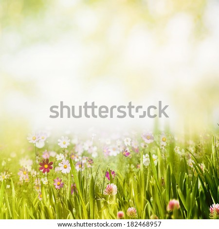 Summer forest, abstract natural backgrounds - stock photo