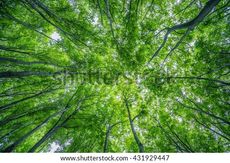 Summer Forest Canopy Nature Photo Background. Forestry. - stock photo