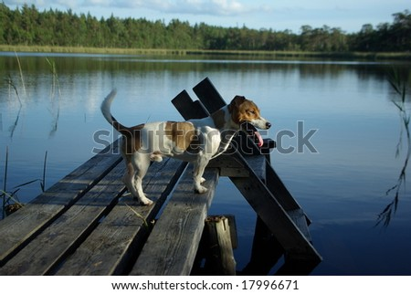 Summer fun near the lake - stock photo