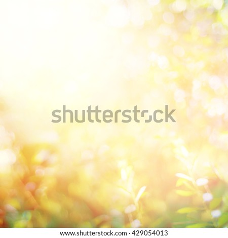 Summer Garden Light Boke Blurred Nature Abstract Background - stock photo