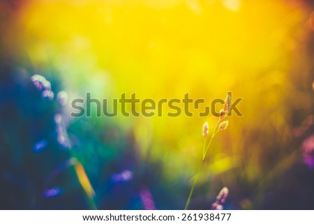 Summer Grass Meadow Close-Up With Bright Sunlight. Sunny Spring Background. Yellow, Blue And Purple Colors Toned Instant Filtered Image - stock photo