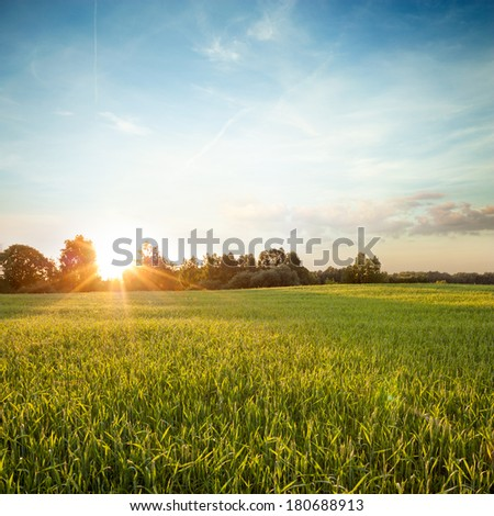 Summer Green Field on the Background of Beautiful Sunset. Copy Space. - stock photo