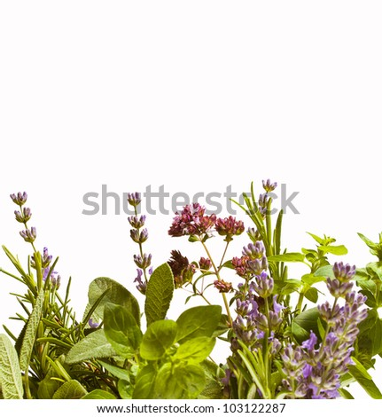 Summer herbs isolated against white background: lavender, rosemary, sage and oregano in bloom. - stock photo