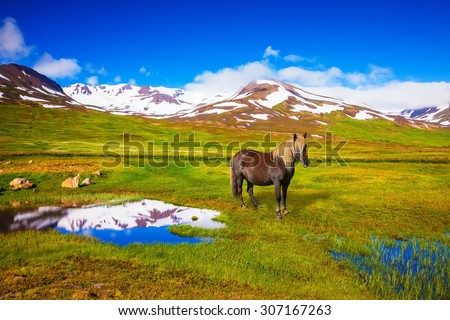 Summer Iceland. Small lake surrounded by green fields. Chestnut Icelandic horse grazing in the meadow - stock photo