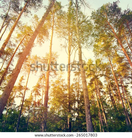 Summer in green forest. Toning color effect was applied. - stock photo