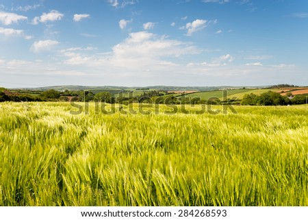 Summer in the English countryside at barley fields near West Taphouse in Cornwall - stock photo