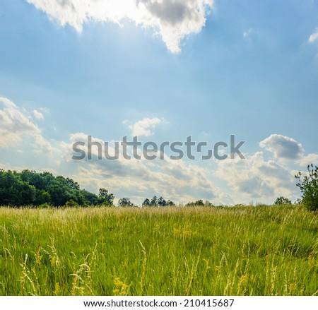 Summer lake landscape - stock photo