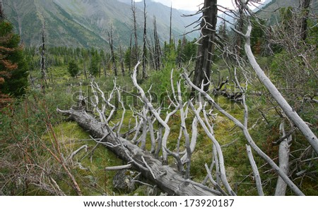 summer landscape deadwood in the forest in the East Sayan cloudy day - stock photo