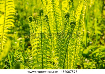 summer landscape . fern growing in the summer forest. the sun's rays pass through the plant and provide pleasant shade - stock photo