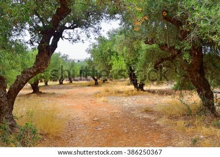 Summer landscape in Crete. - stock photo