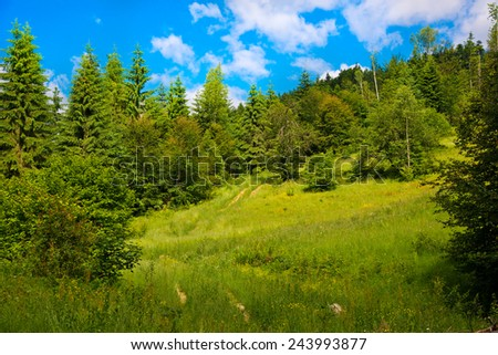 Summer landscape in the Carpathian mountains  - stock photo