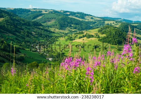 Summer landscape in the Ukrainian Carpathians with blooming fireweed in the foreground. - stock photo