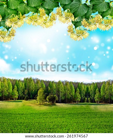 Summer landscape. lime Blossom - stock photo