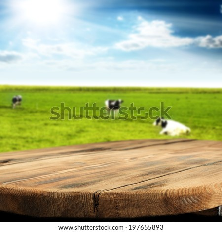 summer landscape of cow  - stock photo