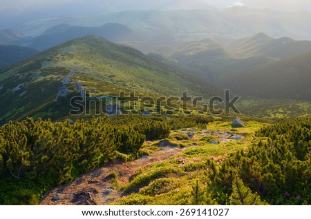 Summer landscape. The path in the mountains. Alpine coniferous forest with pine - stock photo