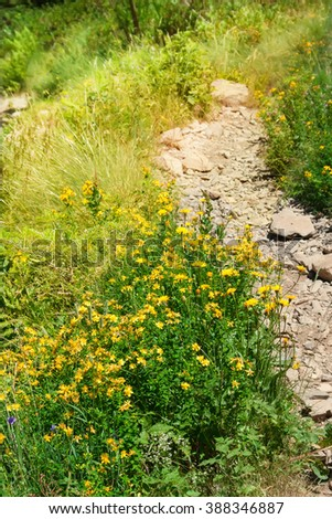 Summer landscape. Walking trail through the alpine meadow to the top of the mountain. - stock photo